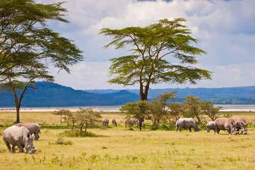Visitamos el Parque Nacional Serengueti en Tanzania