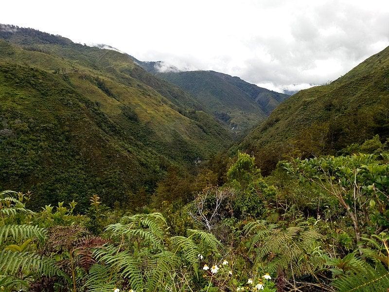 Selva en Papúa Nueva Guinea