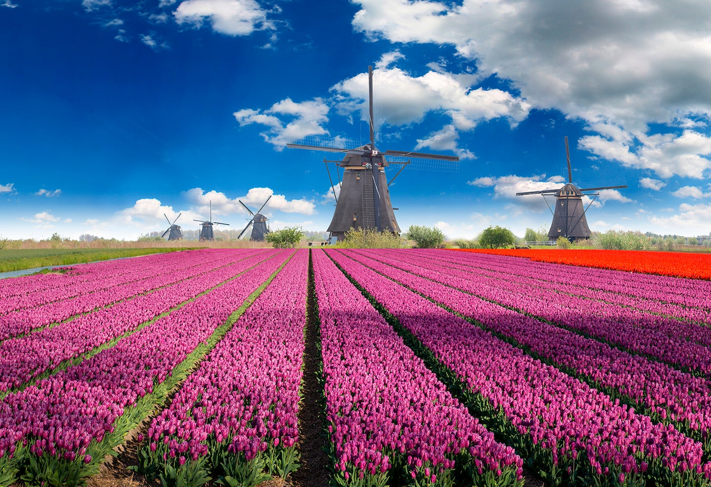 Los campos de flores más bonitos que podrás visitar