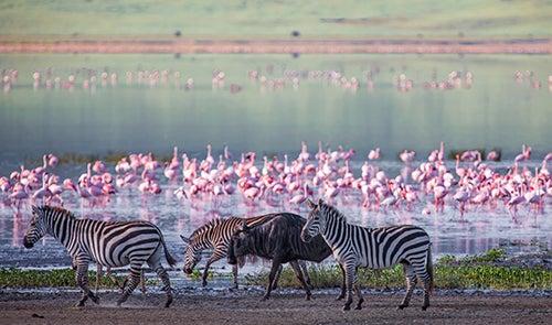 Cráter del Ngorongoro