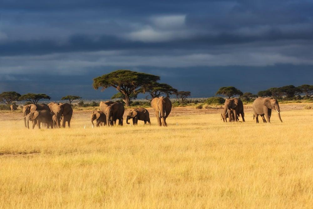 Parque Nacional Masai Mara en Kenia