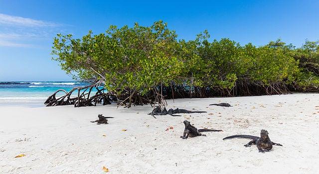 6 animales que tienes que ver en las islas Galápagos