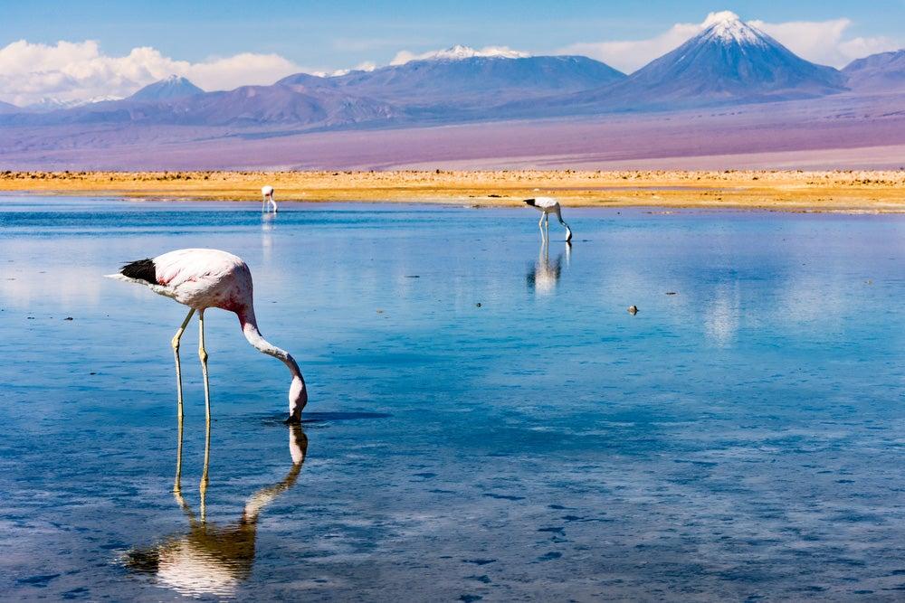 Laguna Chaxa en Atacama