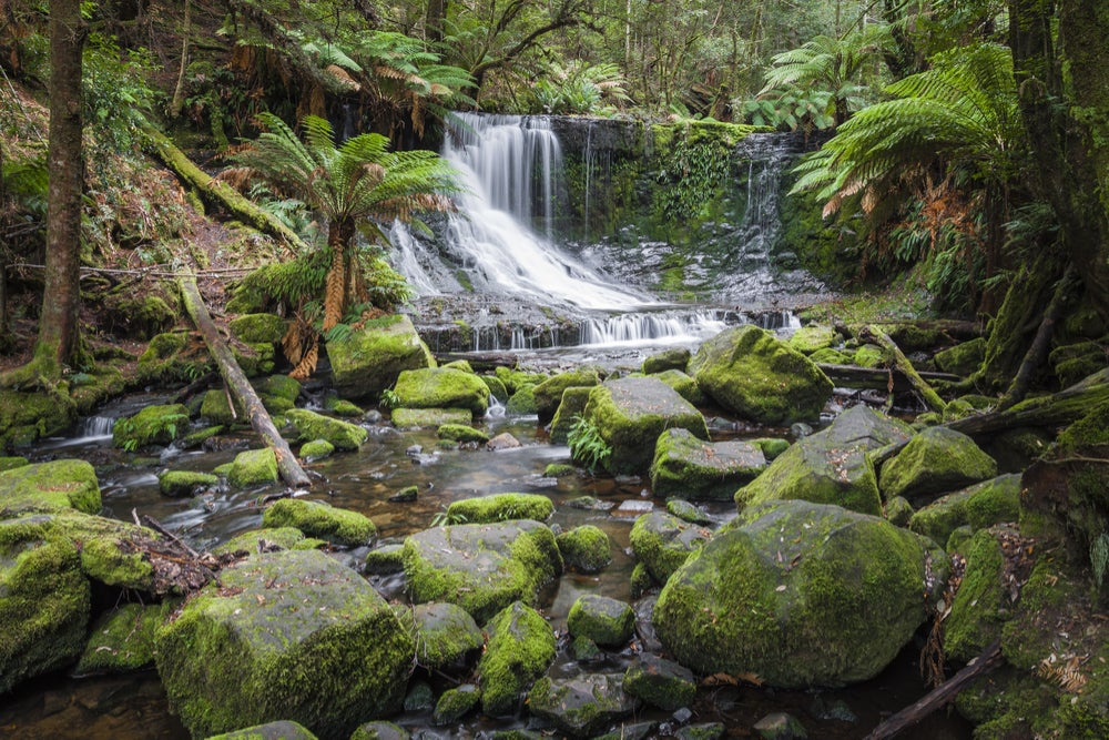 Mount Field National Park en Tasmania