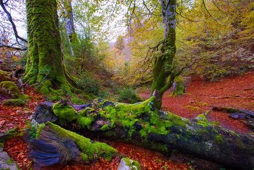 Descubre la Selva de Irati, un bosque precioso en Navarra