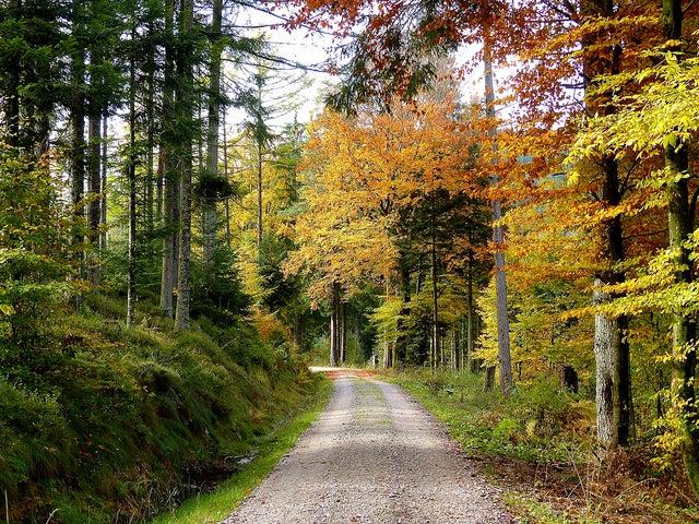 Selva Negra en Alemania