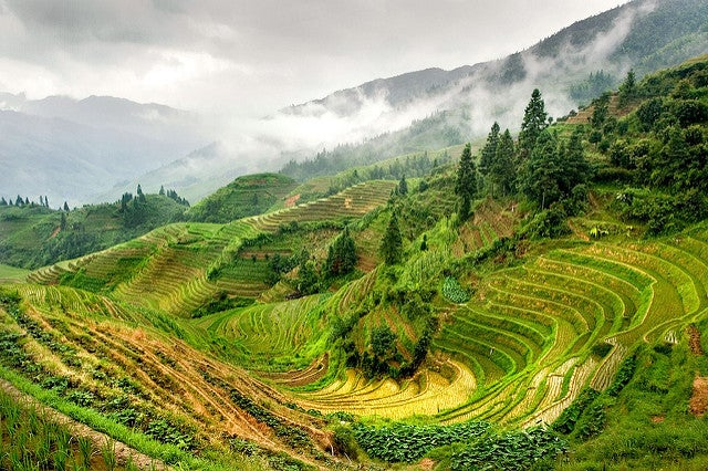 Terrazas de arroz en Guilin