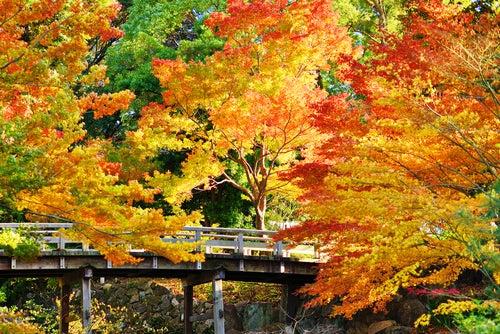 JArdín Topugawa en Nagoya