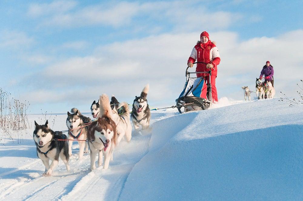 Trineos de perros en Canadá