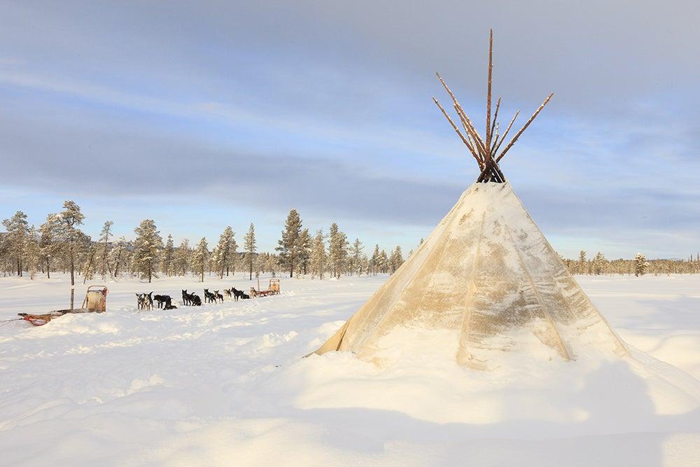 Trineos de perros en Laponia