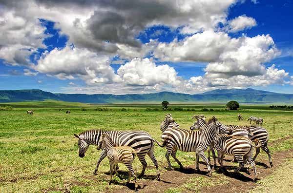 Visitamos la zona de conservación de Ngorongoro