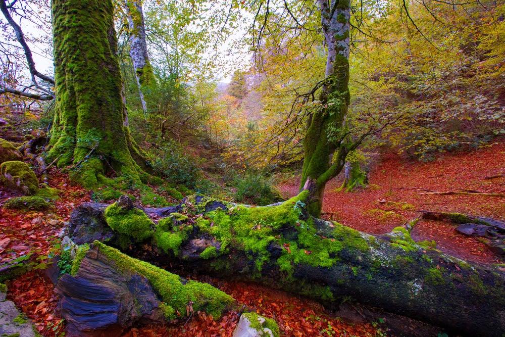 Bosques mágicos, Selva de Irati en NAvarra
