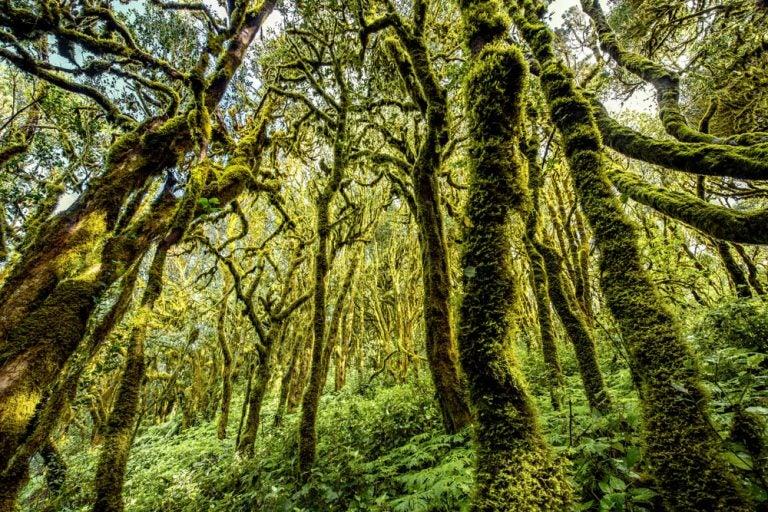 10 bosques mágicos en los que querrás perderte