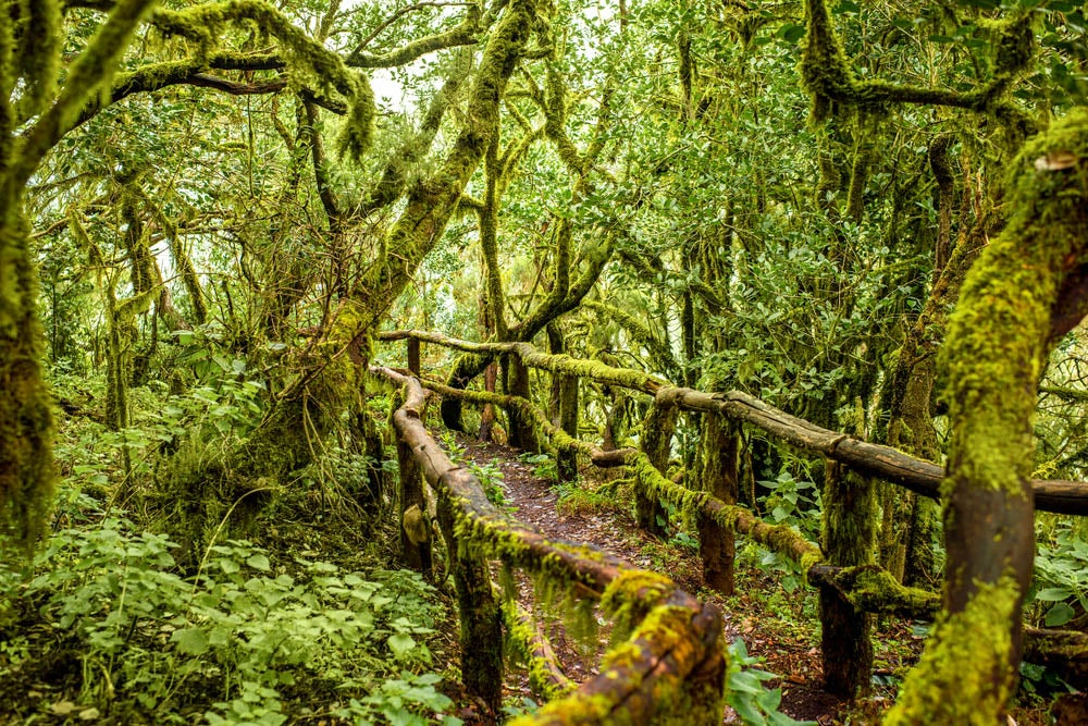 Bosques mágicos, Garajonay en La Gomera