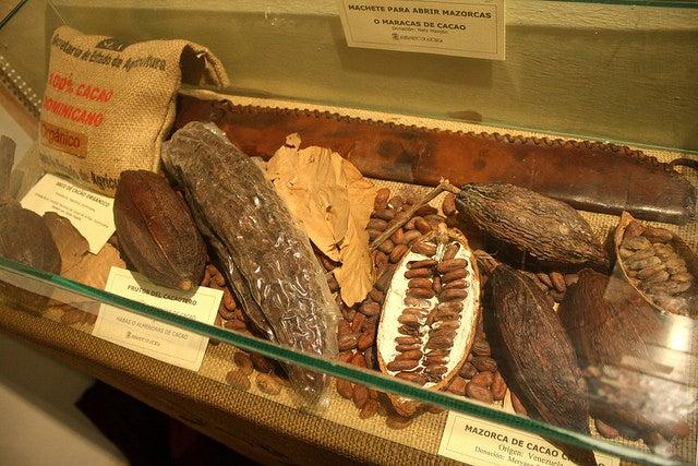 Granos de cacaco en el Museo del Chocolate de Astorga