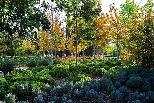 Jardín en Madrid Río