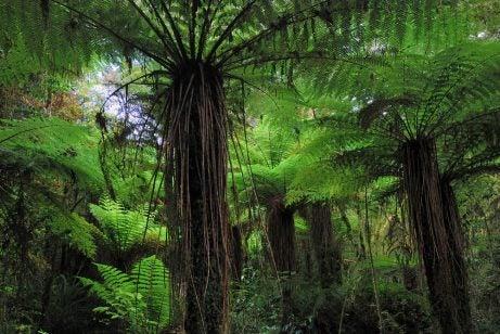 Kahurangui en Nueva Zelanda