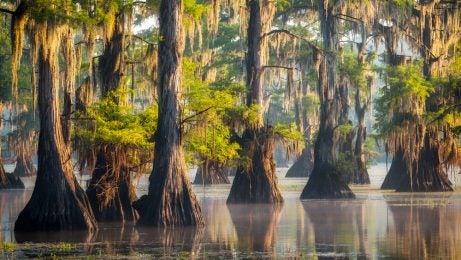 Bosques mágicos, Lago Caddo