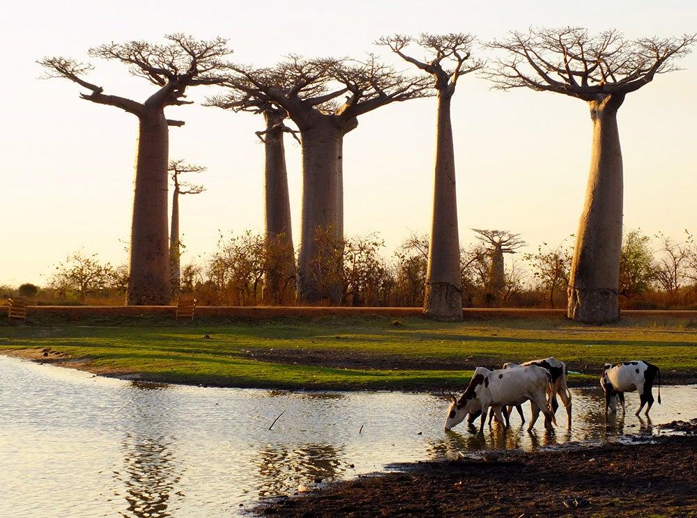 Qué ver y visitar en Madagascar, la gran isla de África