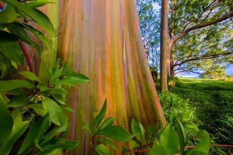 Painted Forest en Maui