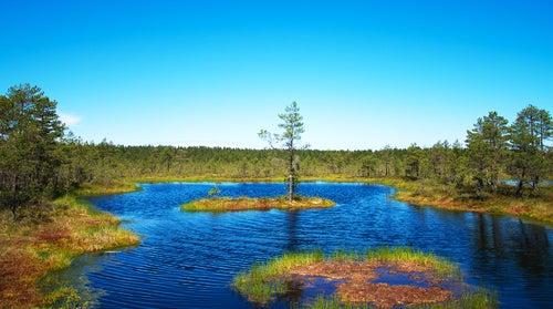 Parque Nacional Lahemaa en Estonia