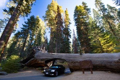 Secuoya National Park en Estados Unidos