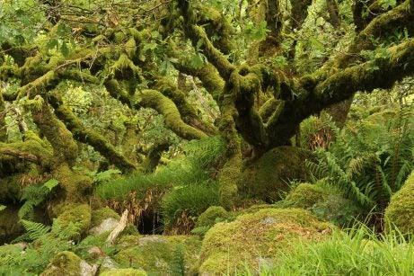 Bosque mágicos: Wistman's Wood