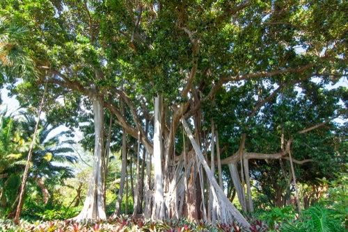 Botánico de Puerto de la Cruz
