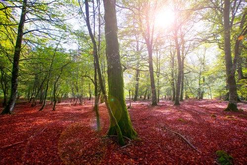 Colores en la Selva de Irati