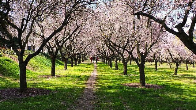 Quinta de los Molinos en Madrid