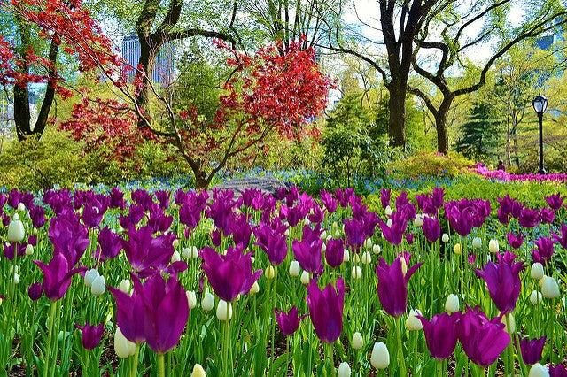Central Park de Nueva York en primavera