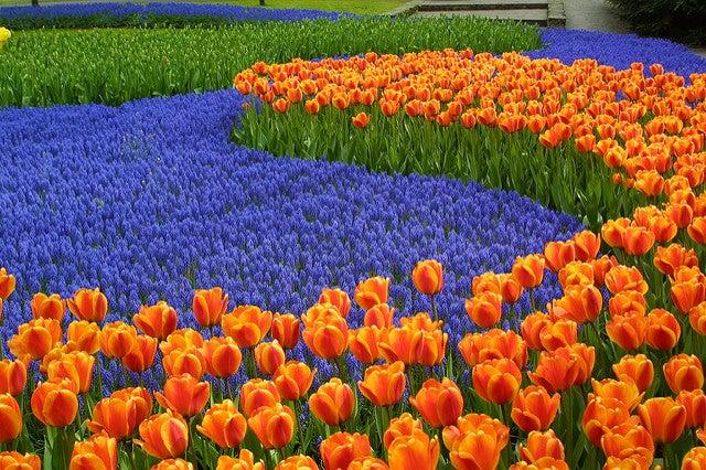 Jardín de Keukenhof en Holanda