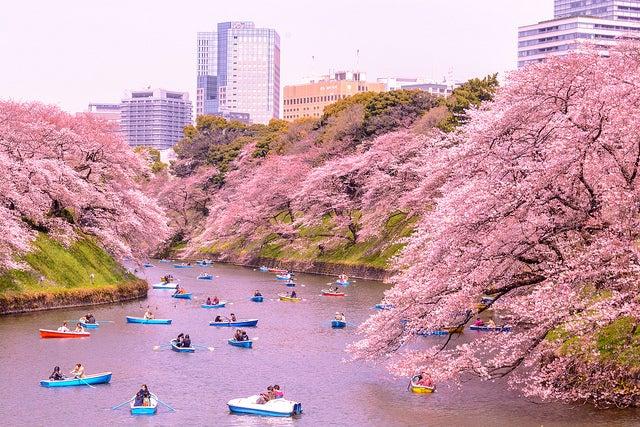 Kitanomaru Park en Tokio en Primavera