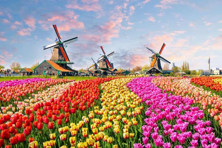 Un inolvidable recorrido por Europa a través de sus flores