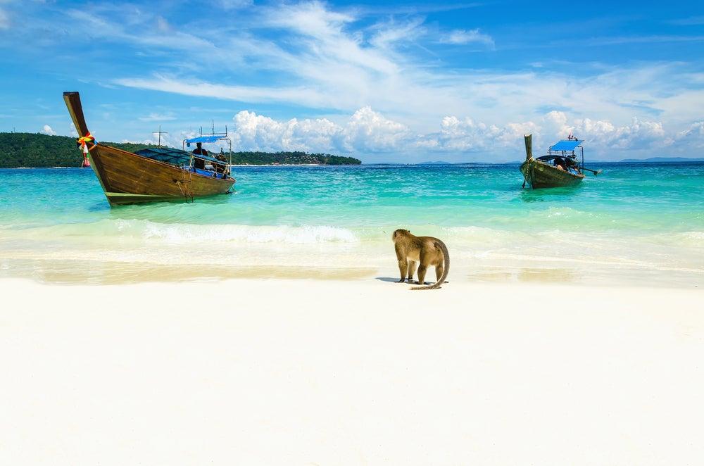 Monkey Beach en Tailandia