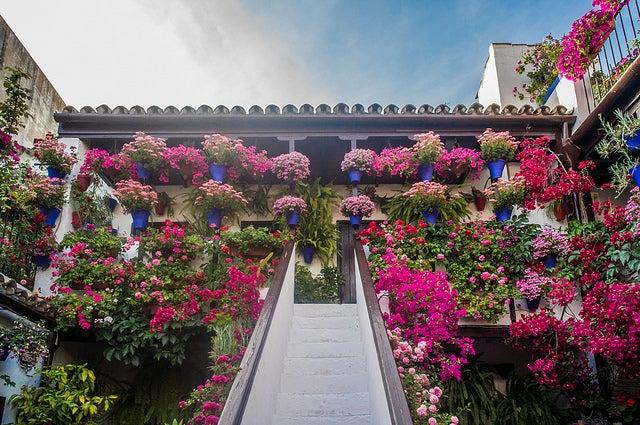 Patio de Córdoba en primavera