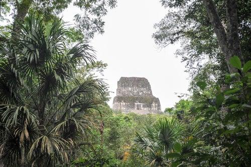 Selva de Peten y ruinas de Tikal