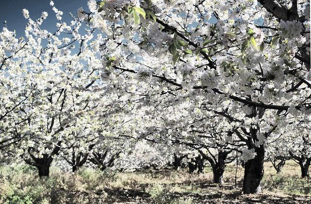 Valle del Jerte, un lugar para disfrutar en primavera