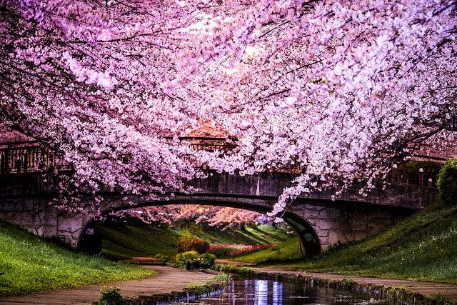 Lugares maravillosos para disfrutar en primavera