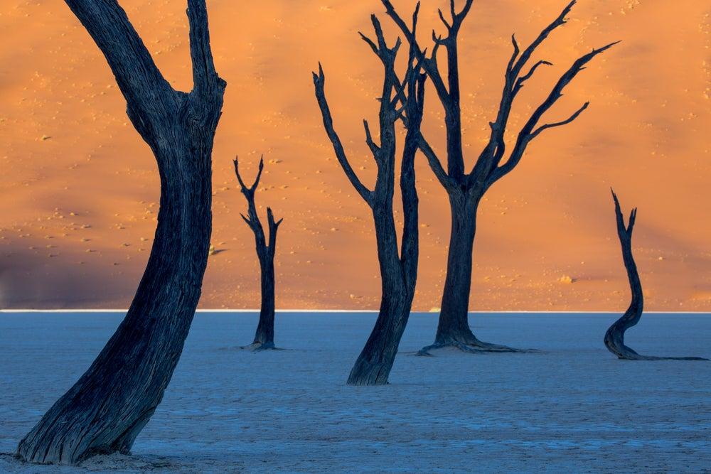 Paisajes de África, Dead Vlei