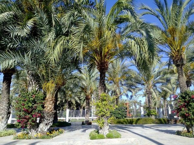 Palmeral de Elche: horario, precio y ubicación