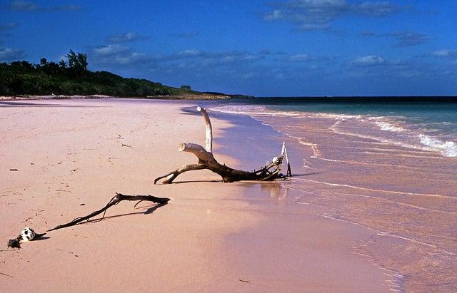 Pink Sand en Bahamas