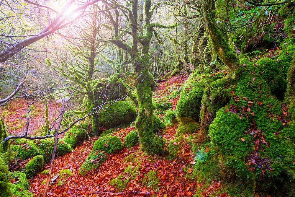 Bosques españoles: selva de Irati