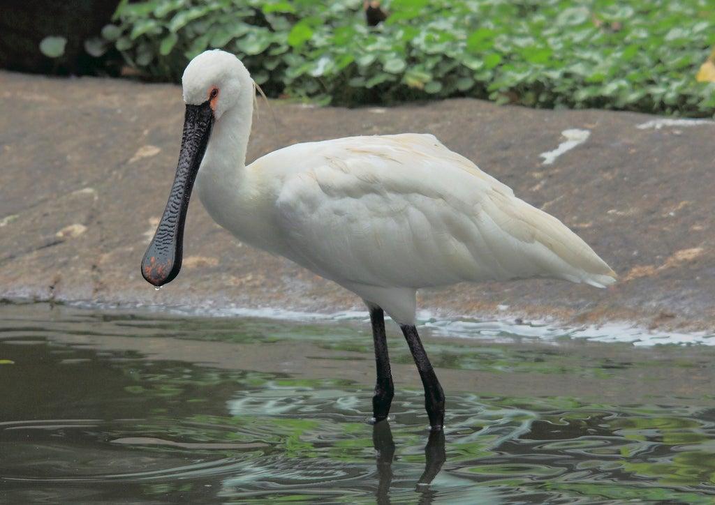 Ave en Jurong Bird Park