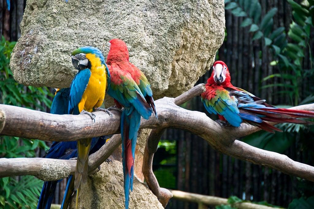 Loros en Jurong Bird Park