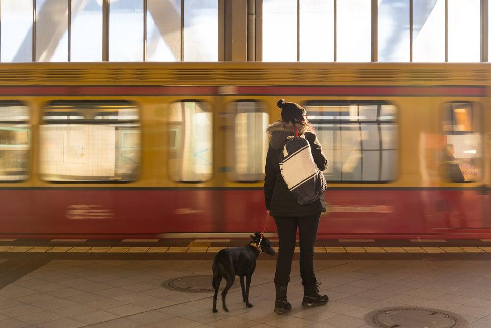 Perro en estación de tren de Berlín