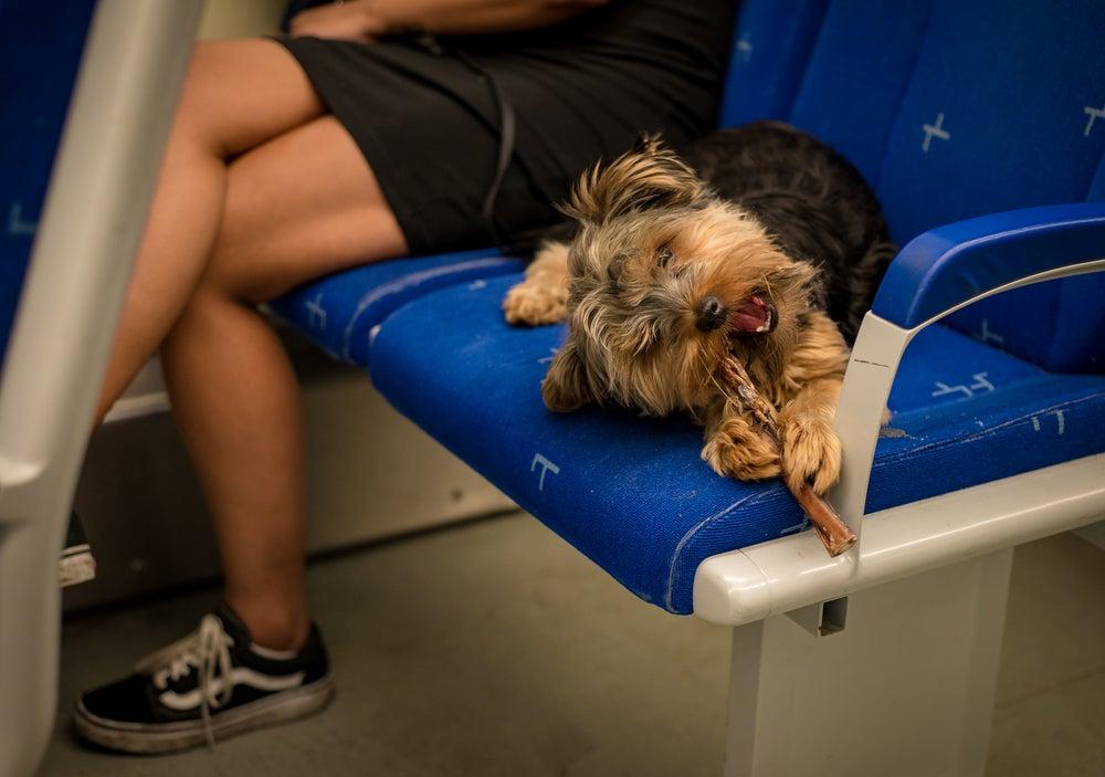 Perro en un tren de Ámsterdam