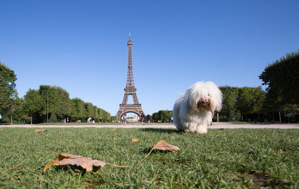 Perro en París