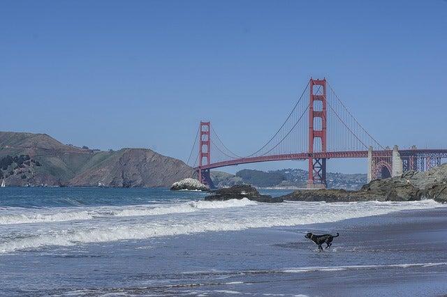 San Francisco, un destino para viajar con tu perro