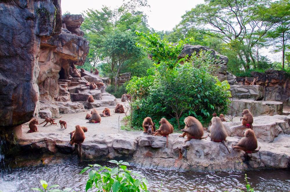 Zoo de Singapur